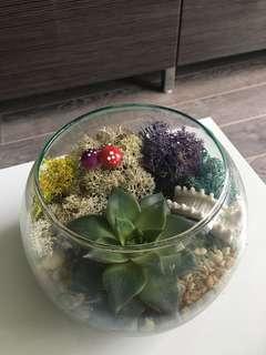 Fish bowl succulent