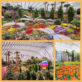 Garden by the bay Sing 🇸🇬