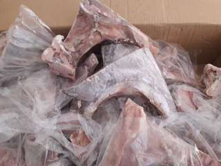 Tuna from Vietnam & Gensan