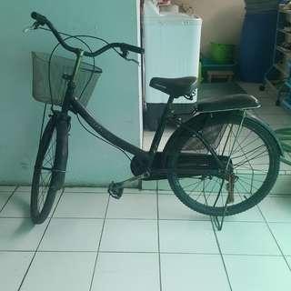 sepeda keranjang dewasa