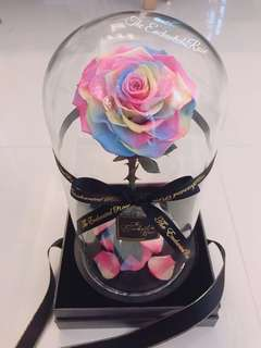 🚚 Rainbow Pastel Preserved Rose in Glass Dome. Beautiful Premium Ecuadorian rose imported from Japan