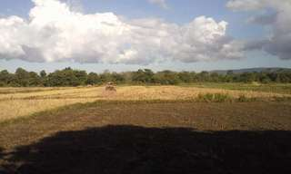 Land and Farm