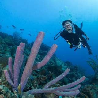 AMI Travel | 5D4N Open Water Diver Course (PADI) with Mimpi Perhentian Resort, Pulau Perhentian