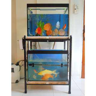 2 x 2ft Tanks with Iron Stand