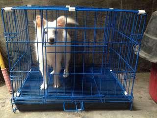 Collapasible Dog cage - Medium