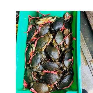 🚚 Live Mud crab and seafood
