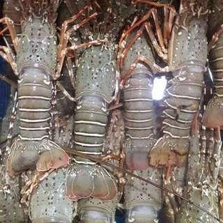 🚚 Frozen Lobster (250g)