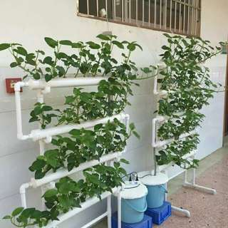 Hydroponics 36 holes vertical, balcony friendly