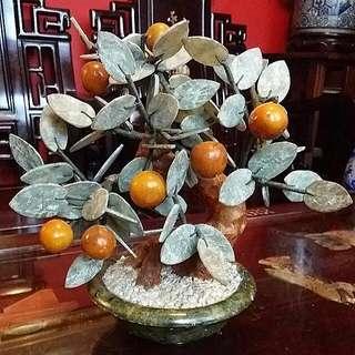 Lime Kamquat Jade Tree In Jade Pot