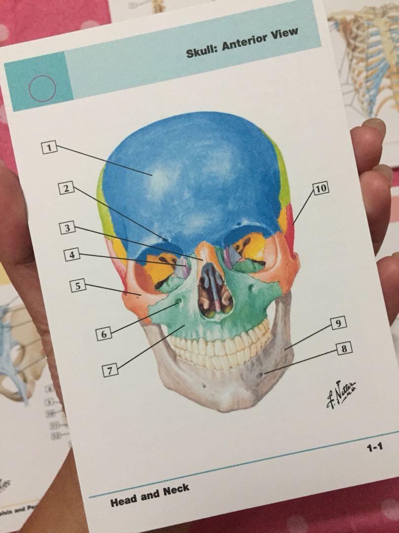 Netter\'s Anatomy Flashcard 4th ed, Textbooks on Carousell