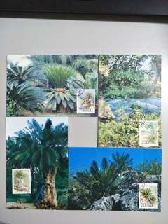 China Postcard Cycads