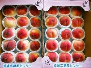 日本桃 山梨 水蜜桃 秀級 13 至 15個裝
