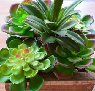 Sukulen Bouquet