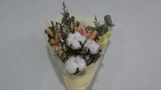 🚚 Dried Cotton Flowers