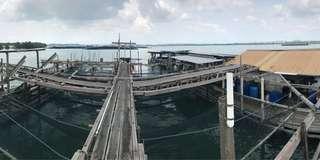 Fish Farm along coast of Pulau Ubin
