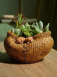 Flower pot(exclude plants)