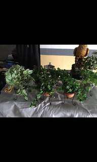 Artificial Plant Set