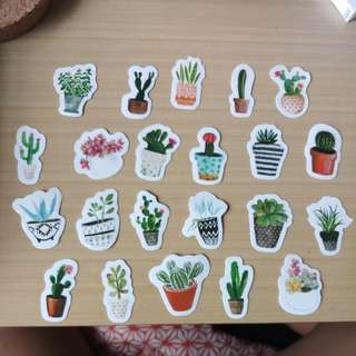 Limited edition Cactus Succulent Stickers