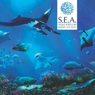*PROMO* Sea Aquarium, Maritime Museum & Typhoon Theatre 4D DEALS!!