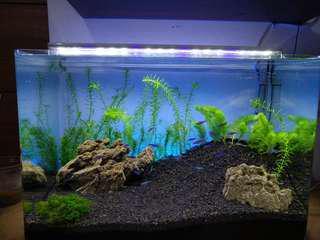 Aquarium tanpa sambungan { 1set /tinggal bawa aja} seperti fi foto tinggal angkut