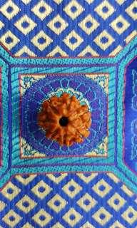 7 Face Rudraksha NEPAL (Mini Size)