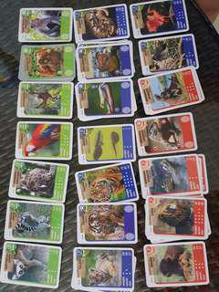 🚚 Ntuc animal safari cards