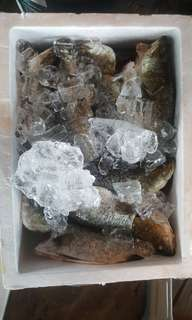 Fresh seafood package from Singapore kelong