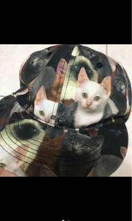 🚚 貓咪帽子