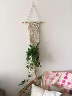 macrame rope with money plant