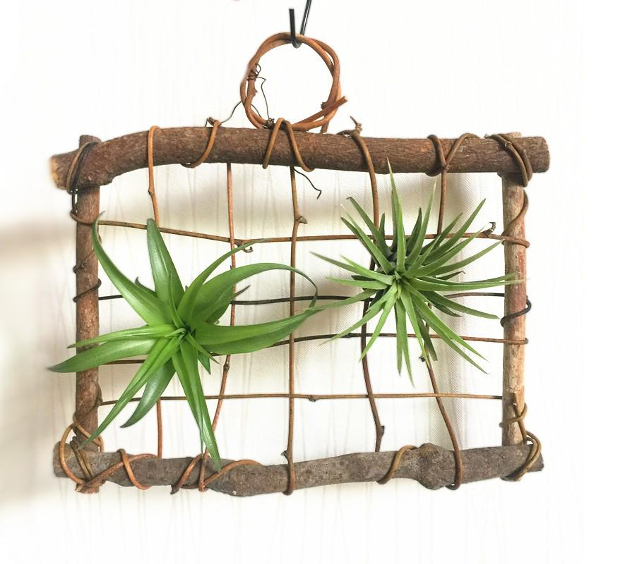 Deco: Natural Twig & Branch Air Plant Hanger, Gardening ...