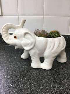 Vintage elephant planter with succulent garden