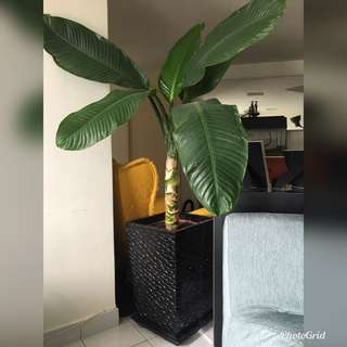 Indoor Plant with square vase