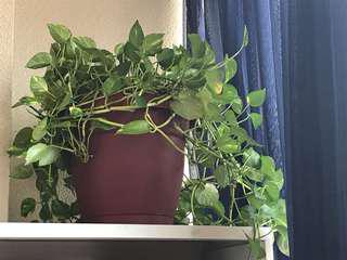 Reduced! Beautiful happy green plant