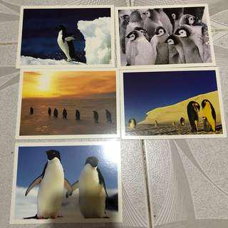 明信片 - postcard 企鵝 penguin postcrossing 動物