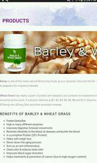 Barley with grass
