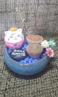 Beautiful fortine cat lithops terrarium