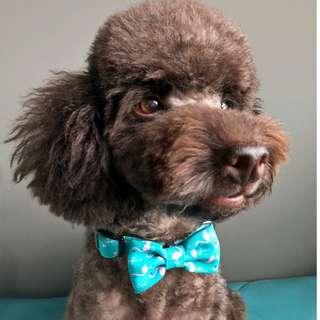 🚚 Izu Pet Collar (matching harness available)