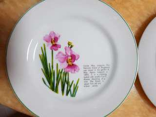 Beautiful Vanda Miss Joaquim Plates