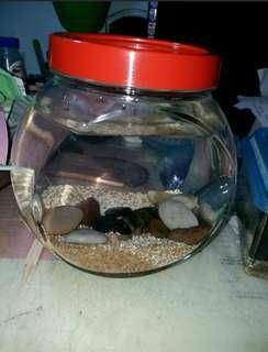 生態瓶(養蝦,養魚,養螯蝦……)