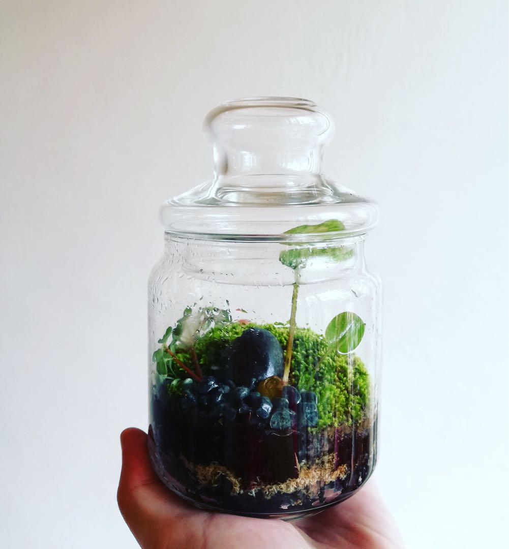 Mini Terrarium Plants Terrarium Table Deco Customised Design