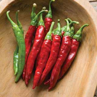 *sold out . vegetable seeds . red rocket chilli pepper