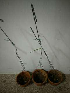 3x hanging clay flower pots
