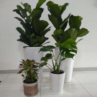 Affordable indoor plants