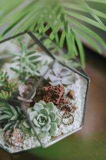 (Pre-order) Terrarium Ring holder with succulents (perfect for wedding)