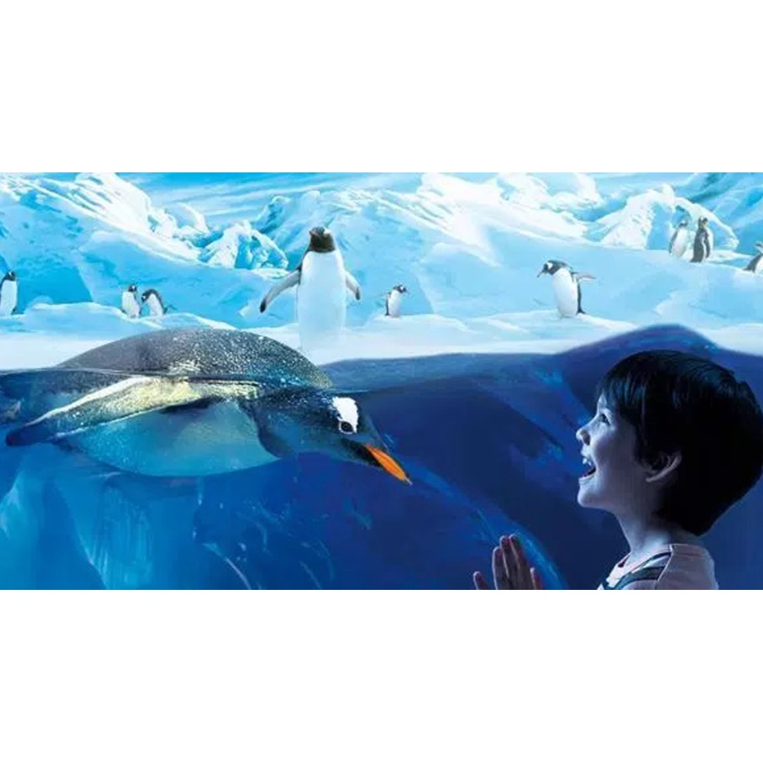 Bangkok Sea Life Ocean World Tickets Vouchers Attractions Thailand Et Ticket Aquarium Only Child On Carousell