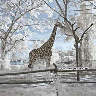 Infrared Photography Package