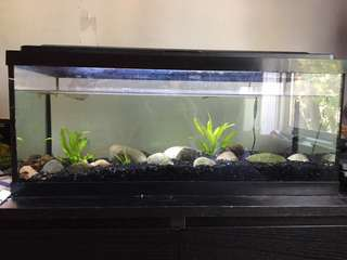 20 long gallon fish tank