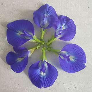 *new . flower seed . blue butterfly pea