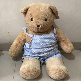 Teddy Bear Boneka