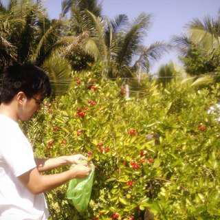 Cranberry Plant Seedlings